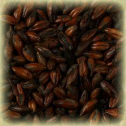 Barley-Roasted